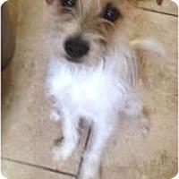 Adopt A Pet :: Rascal - Oceanside, CA