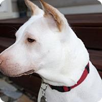 Adopt A Pet :: Sandy - Colorado Springs, CO