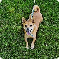 Adopt A Pet :: Willy - courtesy listing - Evergreen, CO