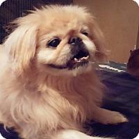 Adopt A Pet :: Bradley - Brooksville, FL