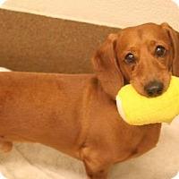 Adopt A Pet :: Lars - Sioux Falls, SD