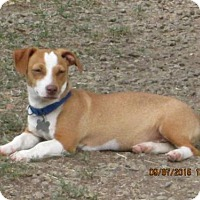 Adopt A Pet :: Freddie - Lincolndale, NY