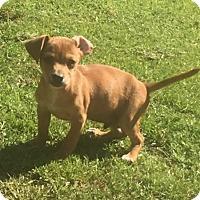Adopt A Pet :: Fuego - Smyrna, GA