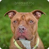 Adopt A Pet :: Bruiser - Sheboygan, WI