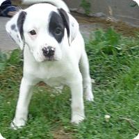 Adopt A Pet :: Zenner - West Chicago, IL