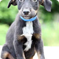 Adopt A Pet :: Nitro - Waldorf, MD