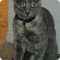 Adopt A Pet :: Stone - Novato, CA