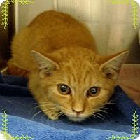Adopt A Pet :: AUTO - Marietta, GA