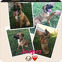 Adopt A Pet :: jasper - Homestead, FL
