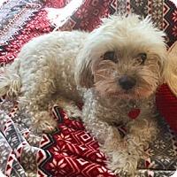 Adopt A Pet :: RICKY - NYC, NY