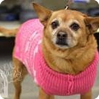 Terrier (Unknown Type, Small) Mix Dog for adoption in Salt Lake City, Utah - Marge