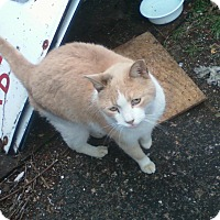Adopt A Pet :: Carmelo - Islip, NY