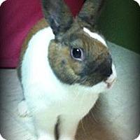 Adopt A Pet :: Getaway - Williston, FL