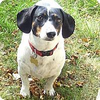 Adopt A Pet :: Suki - San Jose, CA