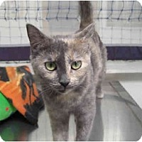 Adopt A Pet :: Chatilly - Phoenix, AZ