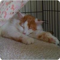Adopt A Pet :: Nellie - Monroe, GA