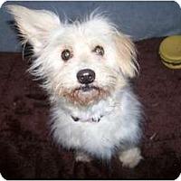 Adopt A Pet :: HiYa ADORABLE - Antioch, IL
