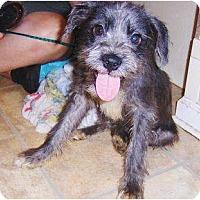 Adopt A Pet :: Willow - Orange Park, FL