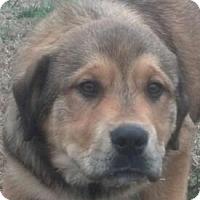 Adopt A Pet :: Bernie - Brattleboro, VT