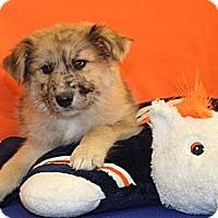 Adopt A Pet :: Touchdown - Broomfield, CO