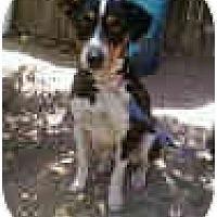 Adopt A Pet :: Pike - Phoenix, AZ