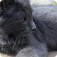 Adopt A Pet :: Barkley - Cleveland, OH