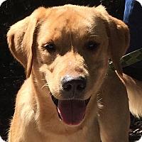 Adopt A Pet :: Bongo - Orlando, FL