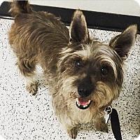 Adopt A Pet :: Kendell - Redondo Beach, CA