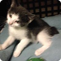 Adopt A Pet :: Chubbs - East Brunswick, NJ