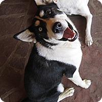 Adopt A Pet :: Taiga - Santa Fe, NM