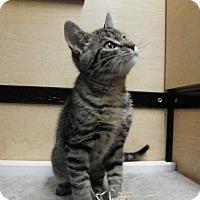 Adopt A Pet :: Turbo - Riverside, CA