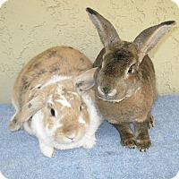 Adopt A Pet :: Isabella & Twix - Bonita, CA