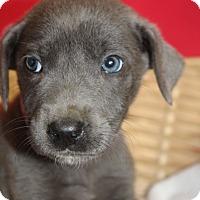 Adopt A Pet :: Sparrow - Waldorf, MD