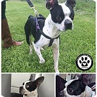 Adopt A Pet :: Jase - Kimberton, PA