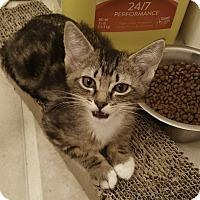 Adopt A Pet :: Greta TG - Schertz, TX