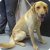 Adopt A Pet :: Buddy - Manning, SC