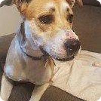 Labrador Retriever Mix Dog for adoption in Hampton, Virginia - CHLOE
