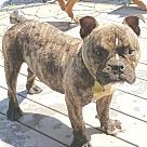 Adopt A Pet :: Poppi