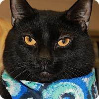 Adopt A Pet :: MOONSHINE - Clayton, NJ