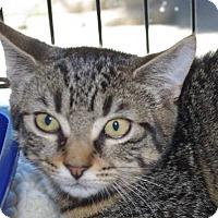 Adopt A Pet :: Lola - Longview, WA