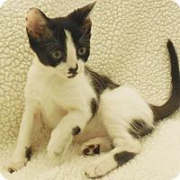 Adopt A Pet :: Meko - Burgaw, NC