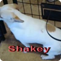 Adopt A Pet :: Shaky - Coleman, TX