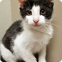 Adopt A Pet :: ADOPTED!!!   Marky - Plainfield, IL