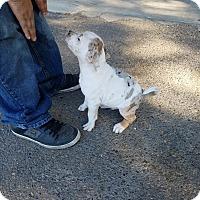 Adopt A Pet :: DOC - Gustine, CA
