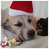 Terrier (Unknown Type, Medium) Mix Puppy for adoption in Rustburg, Virginia - Wrenn-Fostered