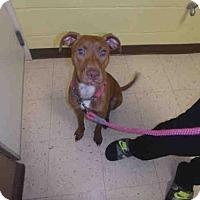 Adopt A Pet :: SADIE - Naples, FL