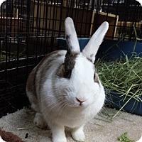 Adopt A Pet :: Blue - Williston, FL