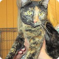 Adopt A Pet :: BonBon - Reeds Spring, MO