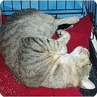 Adopt A Pet :: Nemo - Westfield, MA