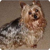 Adopt A Pet :: Gaylin - SAN DIEGO, CA